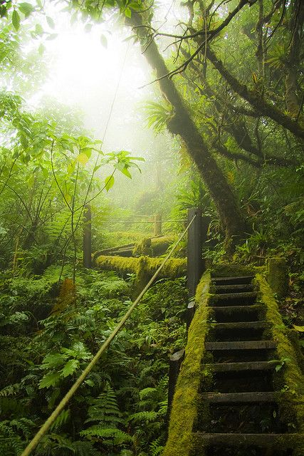 Mombacho Stairs The Mombacho Cloud Forest in Central Nicaragua