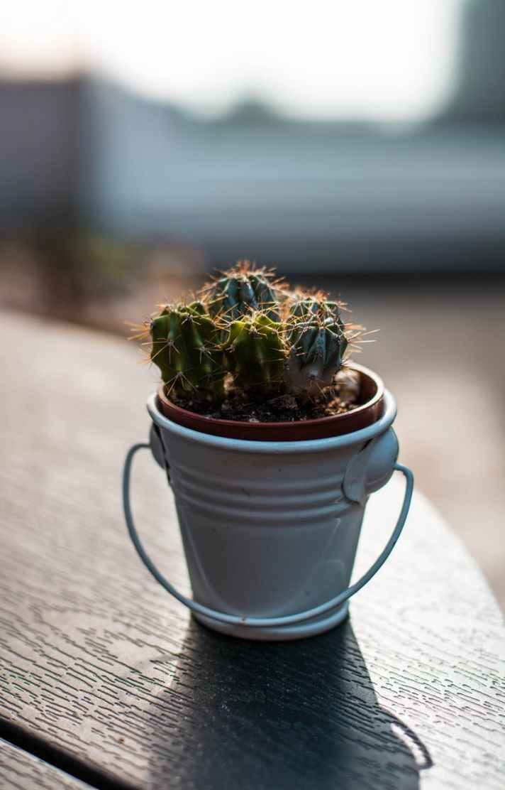 closeup photography of green cactus plant on pail